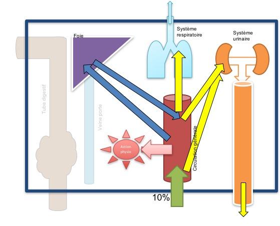 Physiologie de la voie cutanée en aromathérapie (huiles essentielles thérapeutiques).