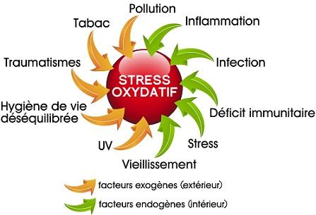 Huiles essentielles antioxydantes